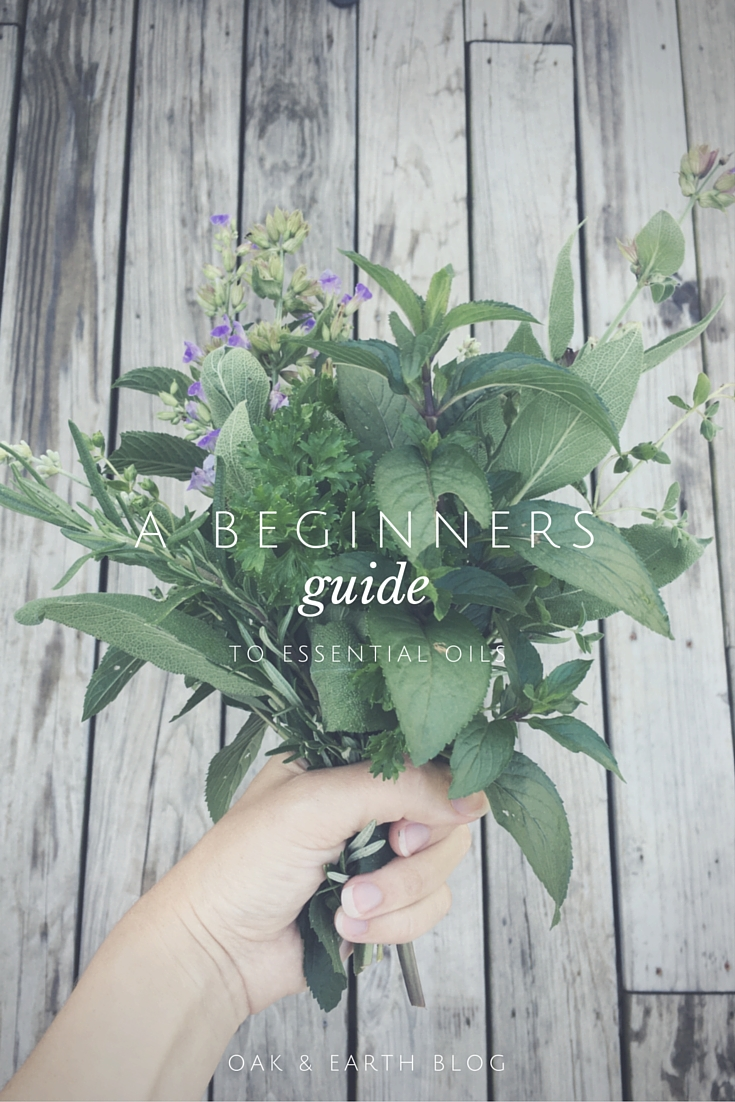 A Beginners Guide To-
